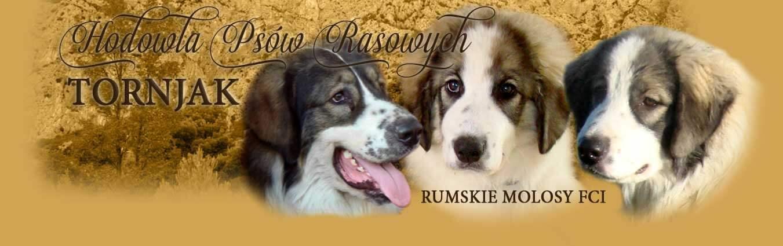 Hodowla Tornjaków - baner na www