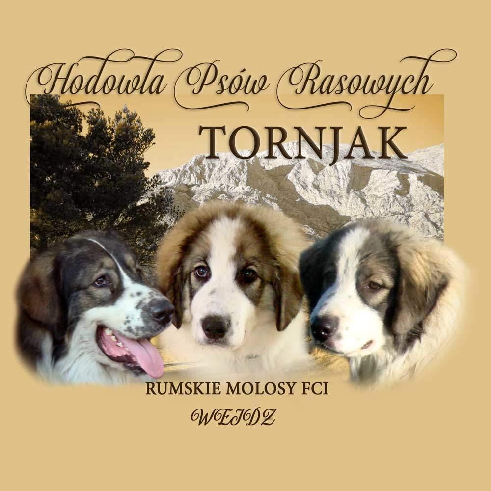 Hodowla Tornjaków - intro na stronę